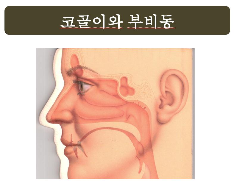 코골이와 부비동